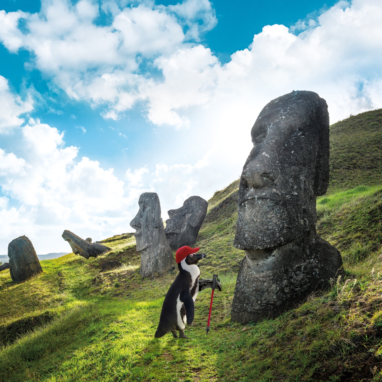 Percy Penguin checking out the giant statues of Easter Island.