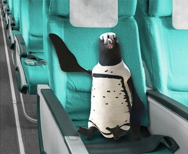 Percy Penguin sitting in an airplane.